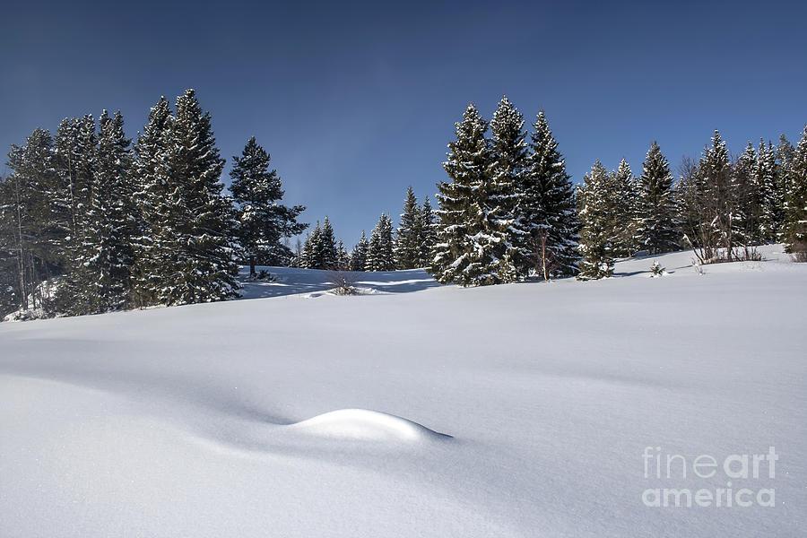 Beautiful Winter Landscape Photograph