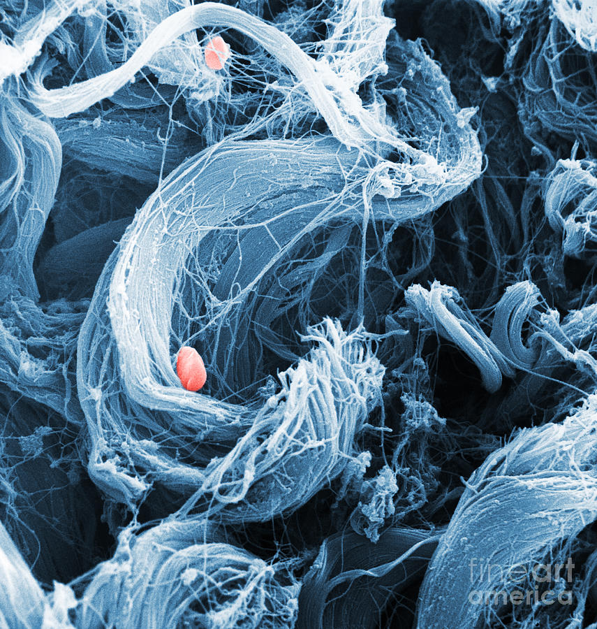 Collagen Sem Photograph