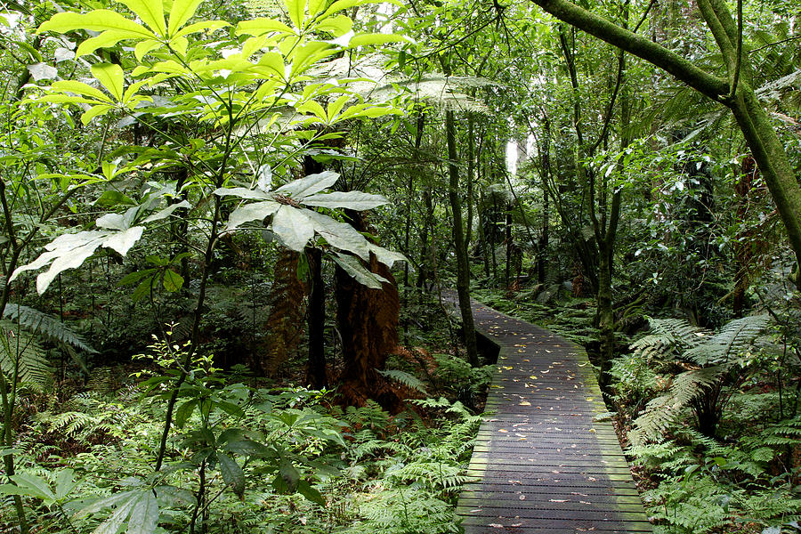 Boardwalk Photograph - Forest by Les Cunliffe