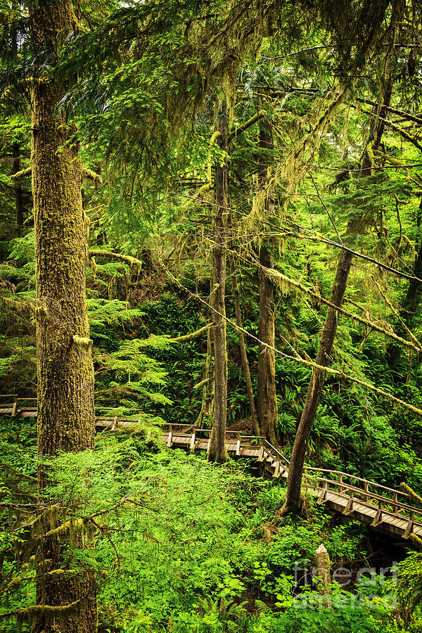 Path In Temperate Rainforest Photograph
