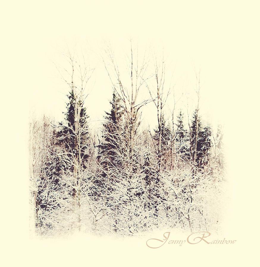 Winter Wonderland. Elegant Knickknacks From Jennyrainbow Photograph