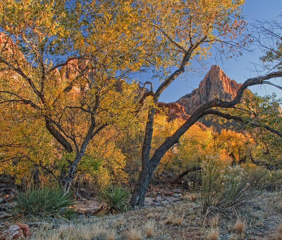 Zion National Park Photograph