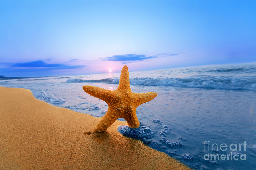 Background Photograph - Starfish by Michal Bednarek