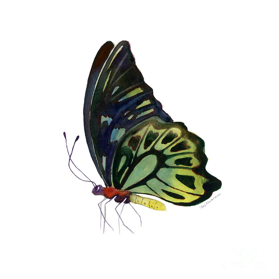 97 Perched Kuranda Butterfly Painting