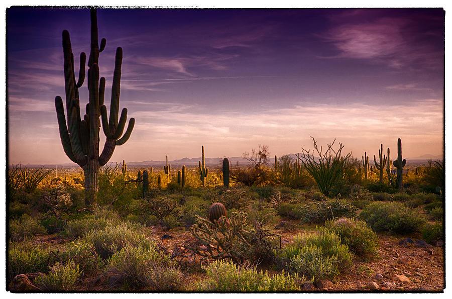 Sunset Photograph - A Beautiful Desert Evening  by Saija  Lehtonen