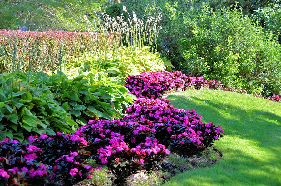 Landscape Bushes With Odor : A beautiful landscape of colorful flowers and plants on