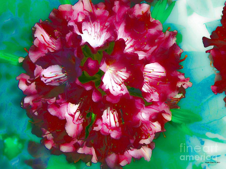 A Beautiful Rhododendron Photograph  - A Beautiful Rhododendron Fine Art Print