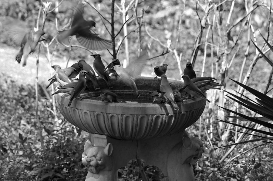 A Bevy Of Birds In Black And White Photograph