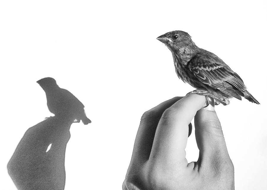 A Bird On The Hand Photograph