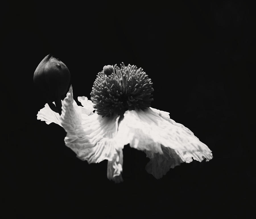 A Black And White Wonder Photograph