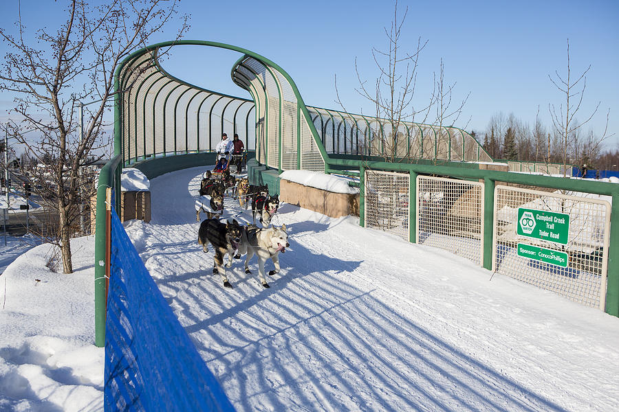 A Bridge In The Iditarod  Photograph  - A Bridge In The Iditarod  Fine Art Print