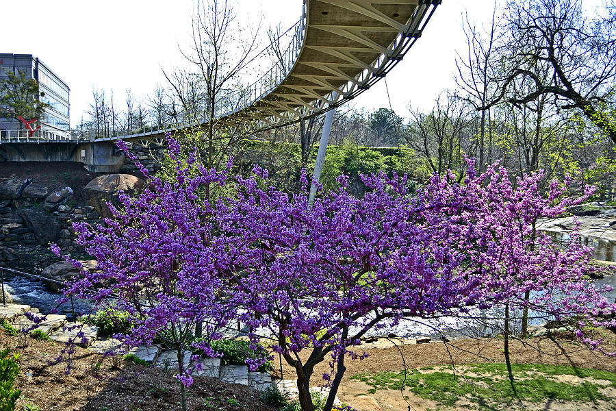 A Bridge To Spring Photograph  - A Bridge To Spring Fine Art Print