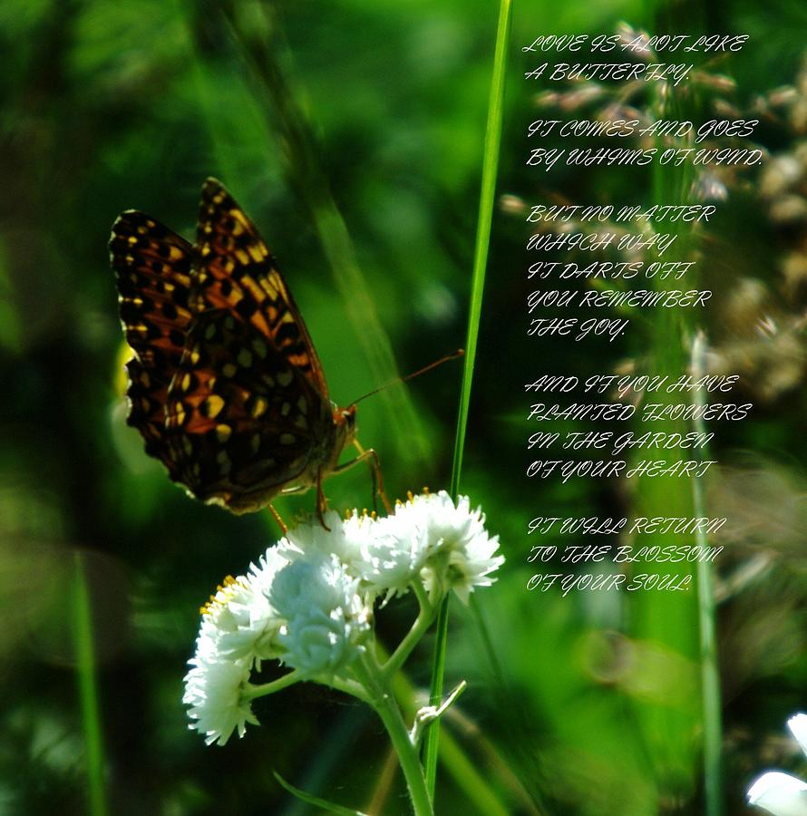 A Butterfly Poem About Love Photograph  - A Butterfly Poem About Love Fine Art Print