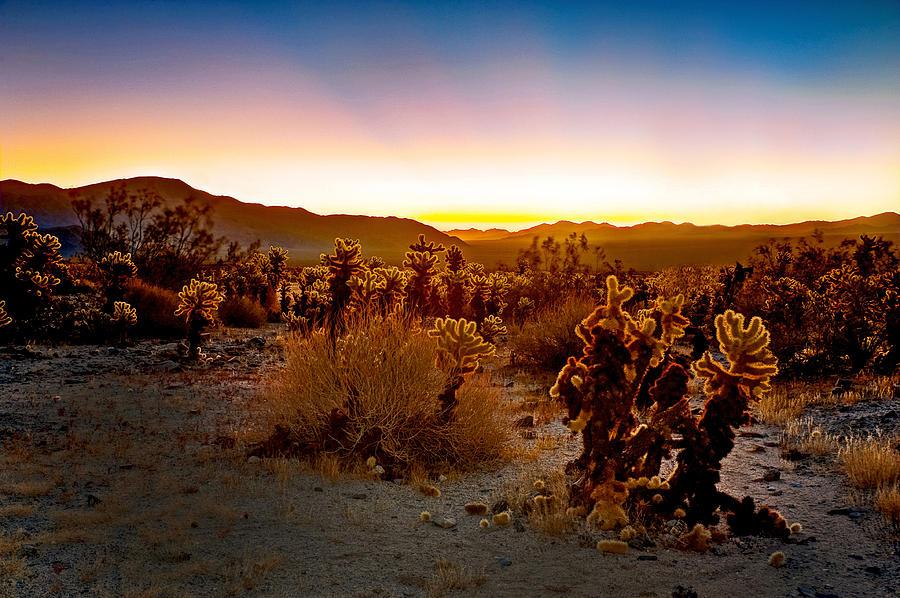 A Cactus Paradise Photograph