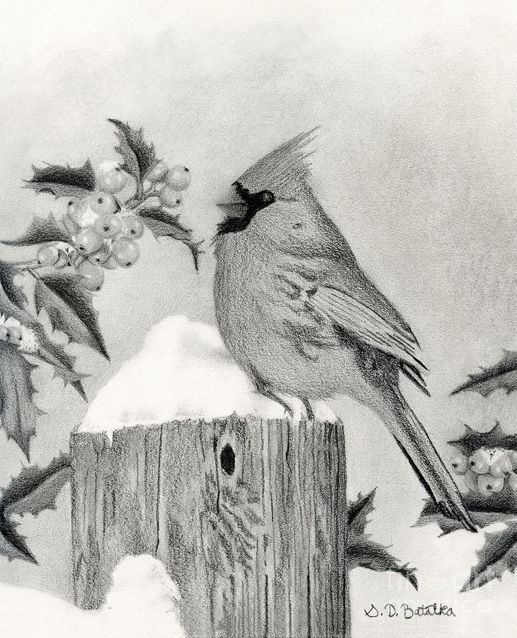 A Cardinal And Holly Drawing by Sarah Batalka
