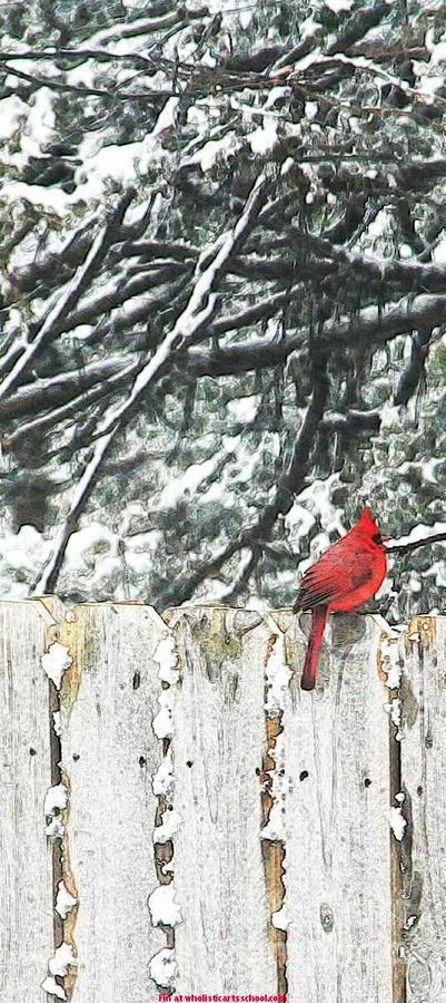 A Christmas Cardinal Painting