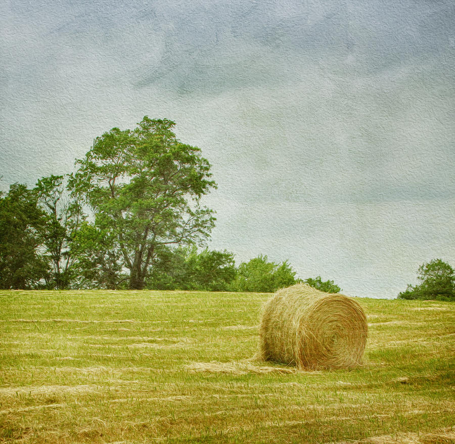 A Day At The Farm Photograph
