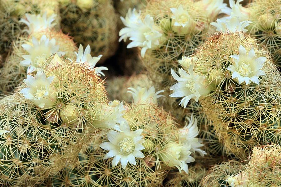 A Desert Floral Photograph