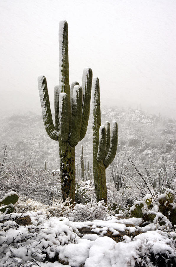 Arizona Photograph - A Desert Southwest Snow Day  by Saija  Lehtonen