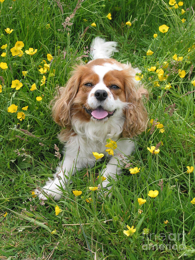 Dog Photograph Photograph - A Dogs Buttercup Heaven by Jo Collins