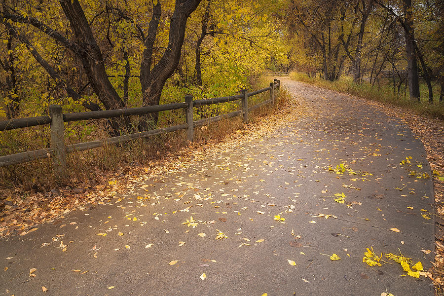Fall Photograph - A Fall Walk by Michael Van Beber