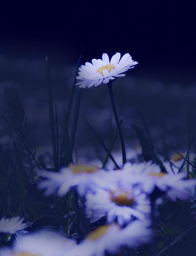 A Fantastic Blue World Photograph