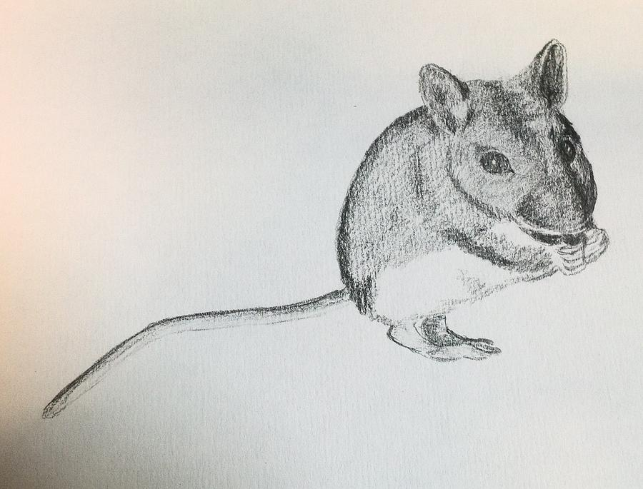 A Field Mouse  Drawing