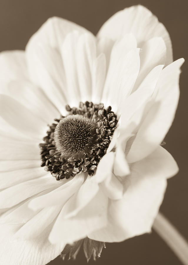 Anemone Photograph - A Focus On The Details by Caitlyn  Grasso