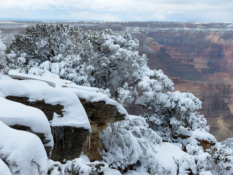A Foot At The Canyon Photograph
