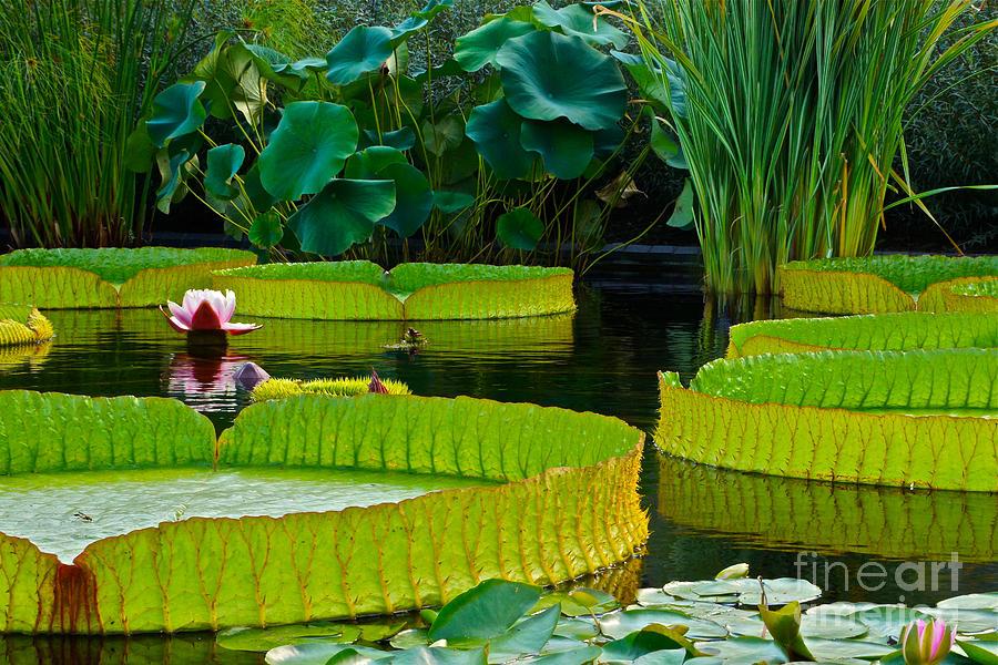 A Garden In Gentle Waters Photograph
