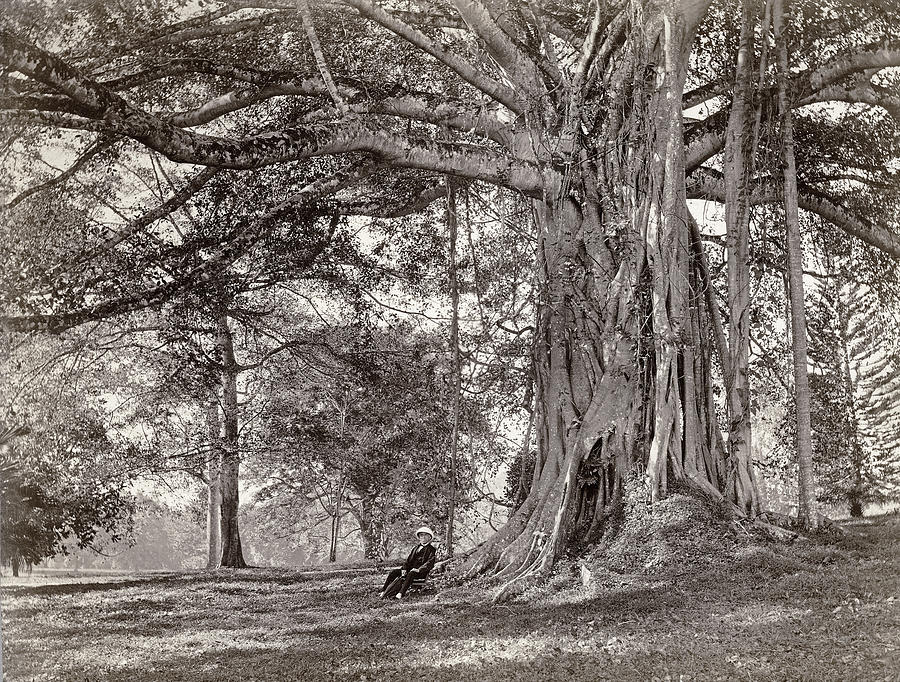 A Gentleman Sitting Beneath A Large Native Tree In British Ceylon Photograph