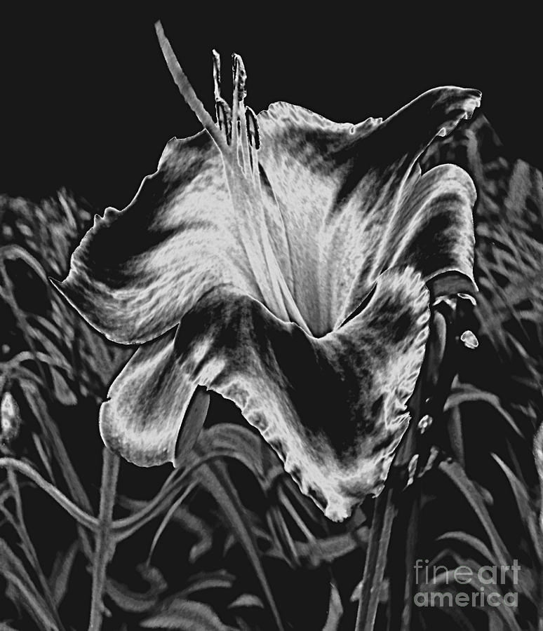 A Ghostly Daylily Bloom In Original Black And White Photograph  - A Ghostly Daylily Bloom In Original Black And White Fine Art Print