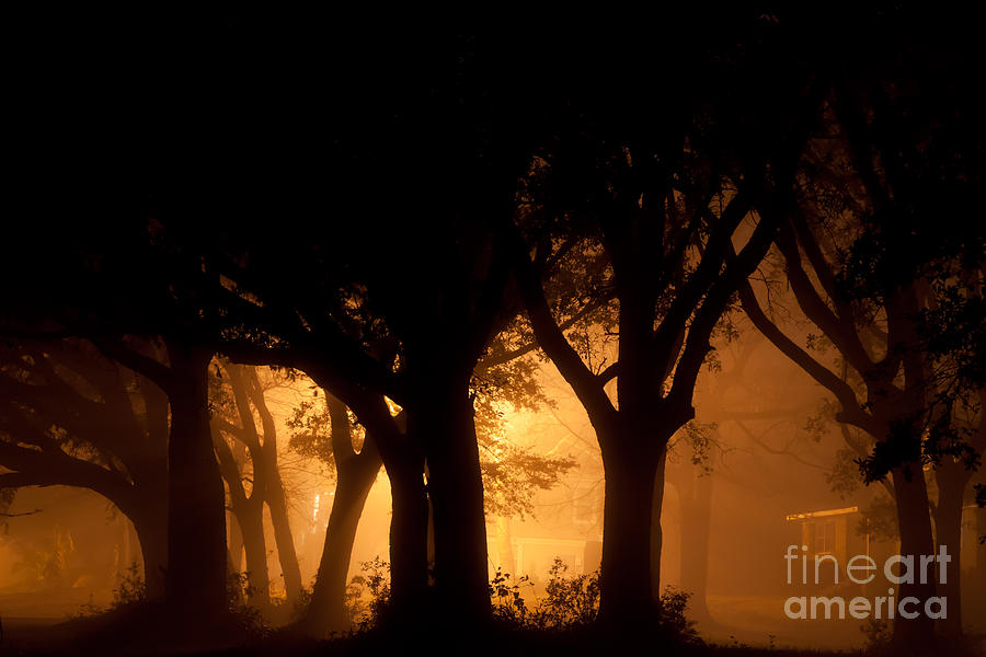 A Grove Of Trees Surrounded By Fog And Golden Light Photograph