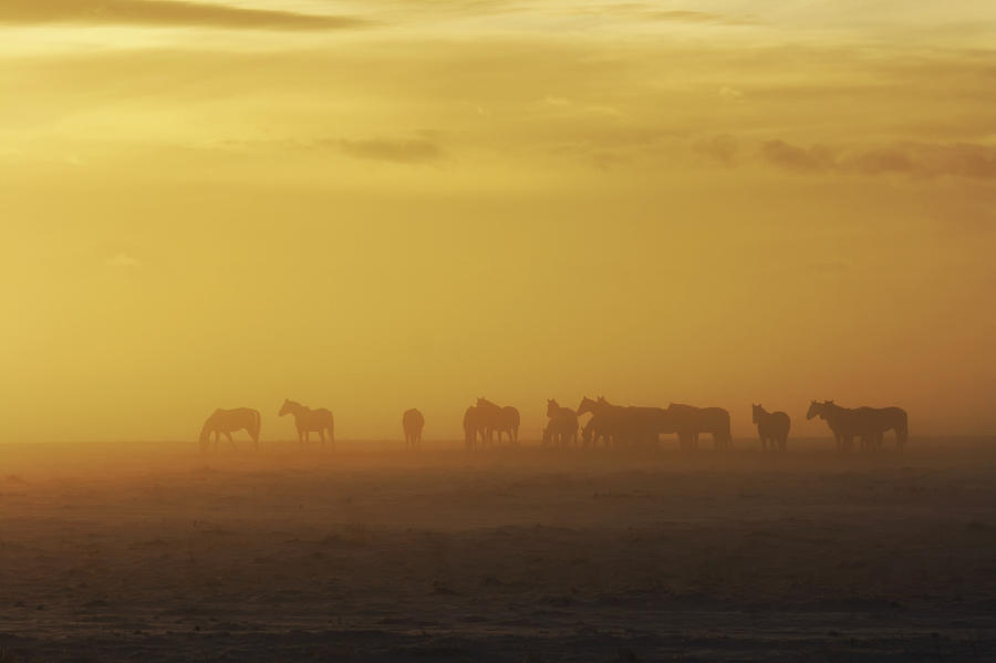 A Herd Of Horses In The Morning Fog Photograph