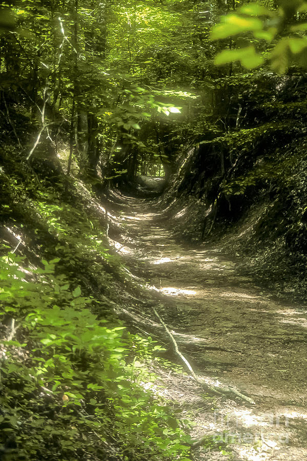 Natchez Trace Parkway Parkways  Tree Trees S Nature Mississippi Landscape Landscapes Path Paths Photograph - A Hole In The Forest by Bob Phillips