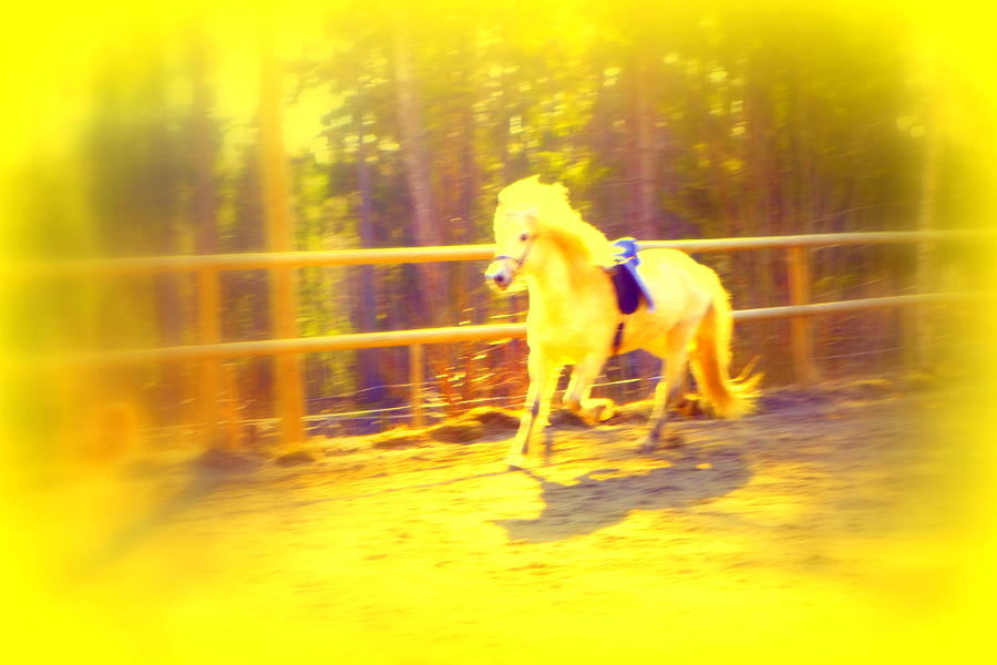 A Horse For A Princess Photograph  - A Horse For A Princess Fine Art Print
