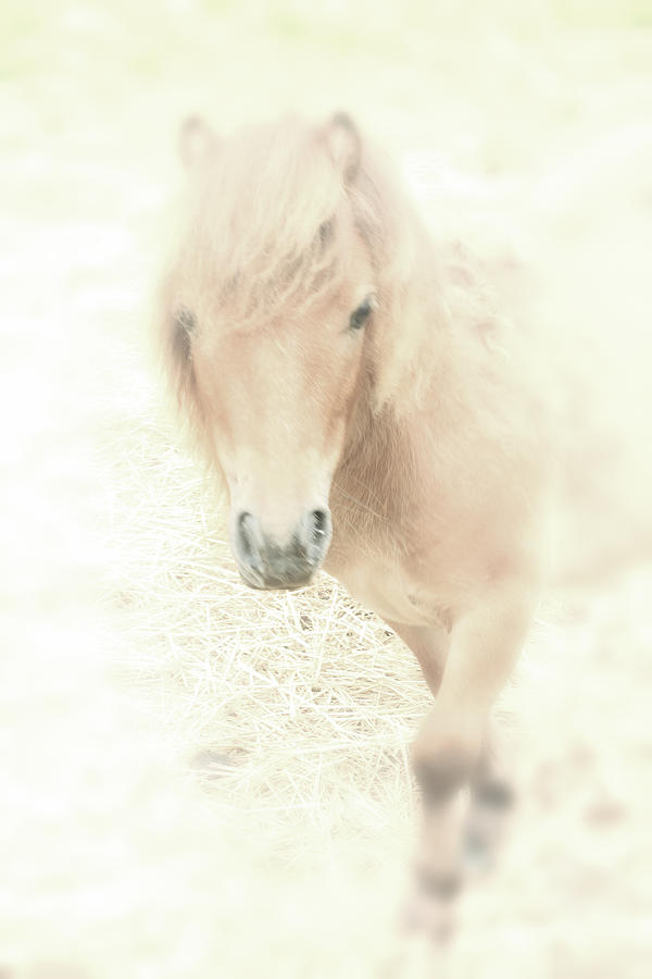 Horse Photograph - A Horses Spirit by Karol Livote