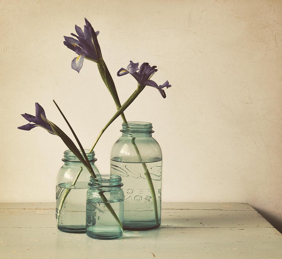 Iris Photograph - A Little Bit Country by Amy Weiss