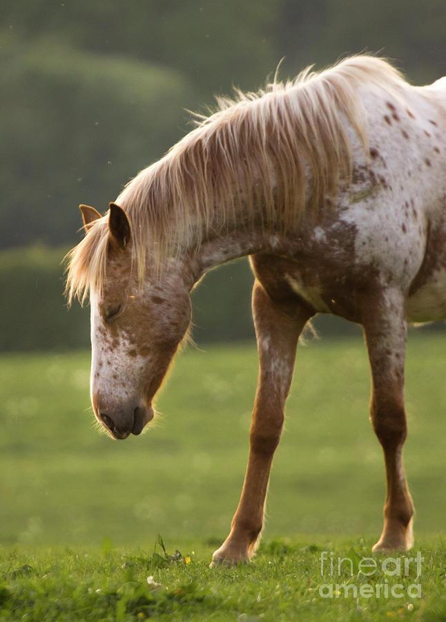Horse Photograph - A Little Nap by Angel  Tarantella