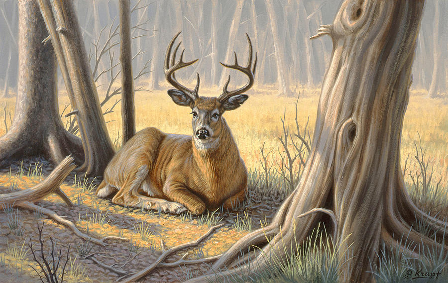 Wildlife Painting - a Little Shade by Paul Krapf
