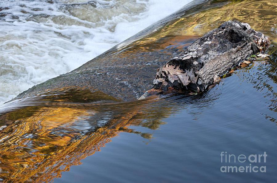 A Log Jams The Dam Photograph