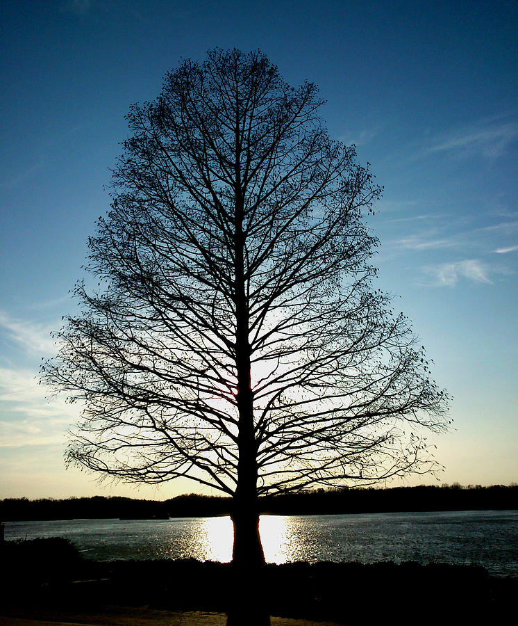 A Lonely Tree Photograph  - A Lonely Tree Fine Art Print