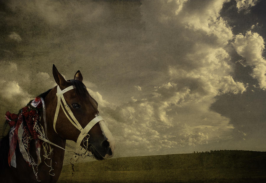 A Lovely Horse Digital Art