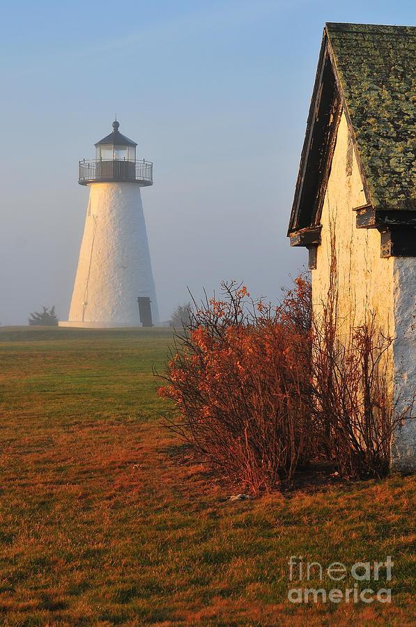 A Morning Fog Photograph