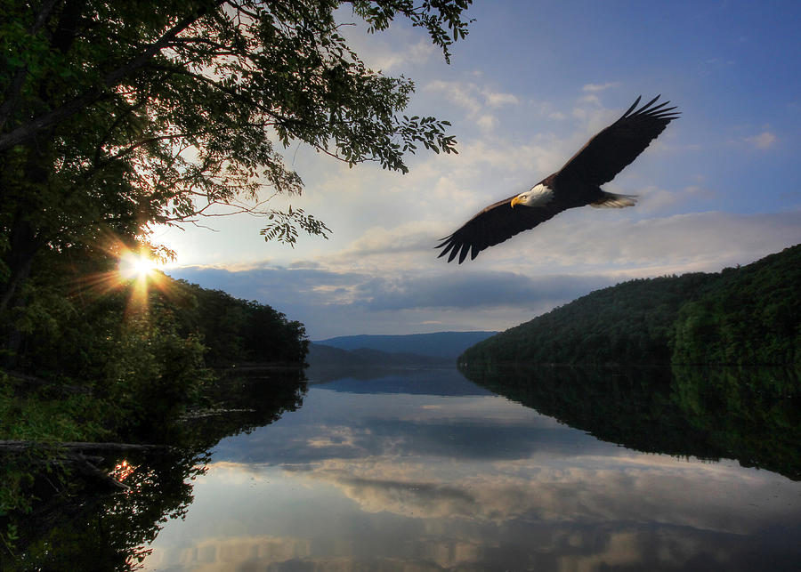 Eagle Photograph - A New Beginning by Lori Deiter