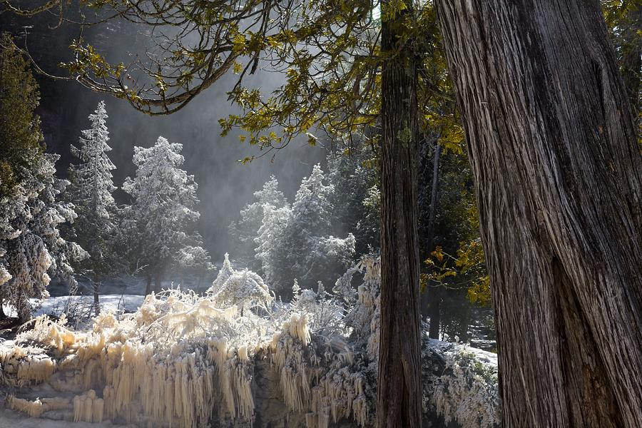 A North Woods Fairy Tale Photograph