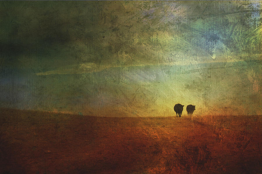 A Painterly Image Of Two Cows Walking Photograph  - A Painterly Image Of Two Cows Walking Fine Art Print