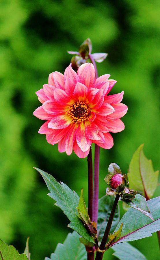 A Pink Flower Photograph