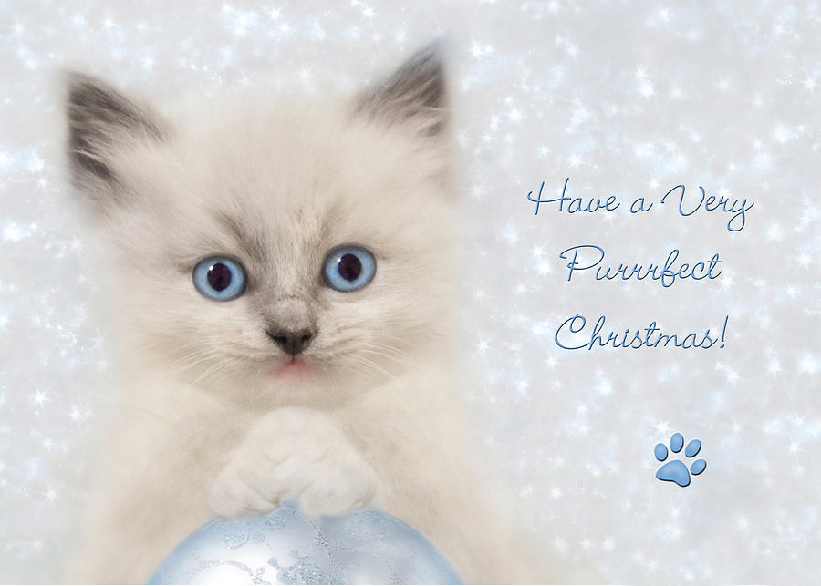A Purrrfect Christmas Photograph  - A Purrrfect Christmas Fine Art Print