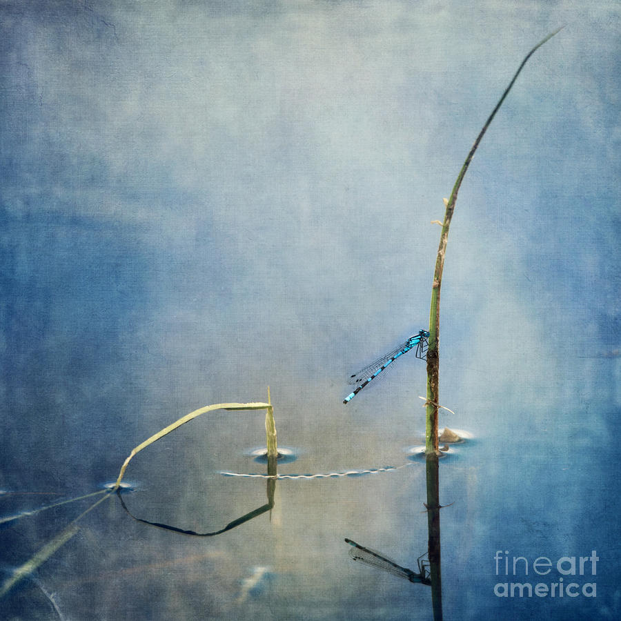 A Quiet Moment Photograph  - A Quiet Moment Fine Art Print